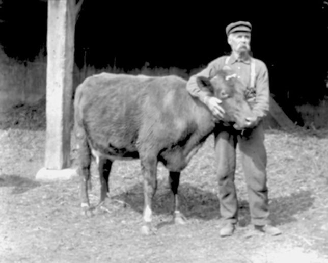 William-B-Affleck-with-$500-cow